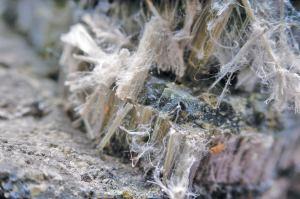 Asbestos removal expert